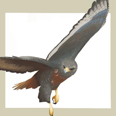 Michelle lo wk09 birds