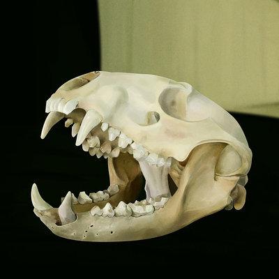 John dervishi skull thumbnail
