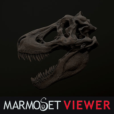 ReX skull study/Marmoset