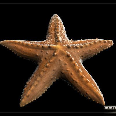 Carina schrom think starfish