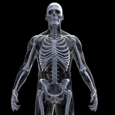 Amin akhshi anatomy transparence 968