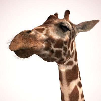 Marco baccioli giraffe face