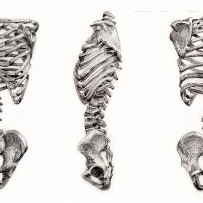 Stephen studyvin skeleton