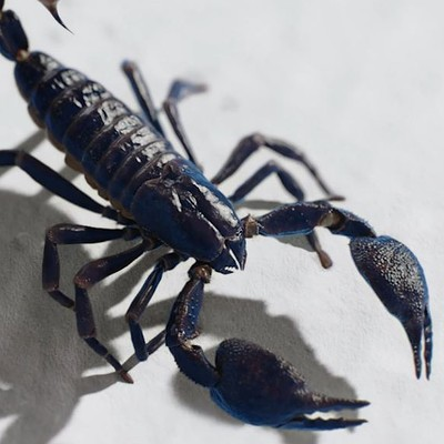 Lisa m scorpion pic
