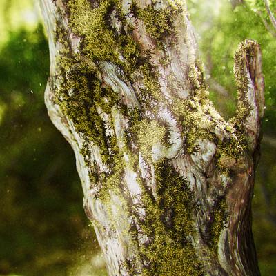Riccardo minervino 04 moss tree