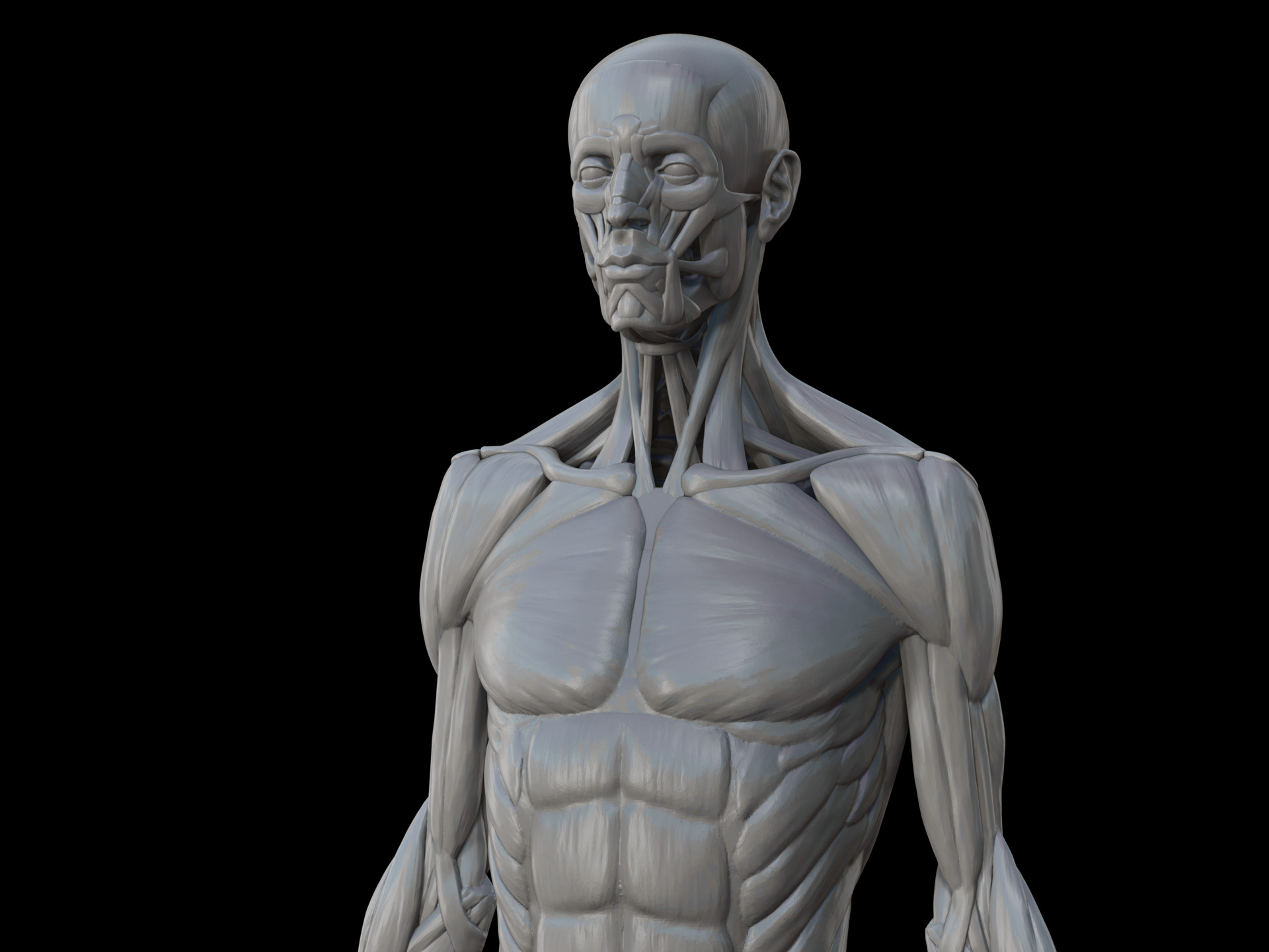 William Hamilton Human Muscle