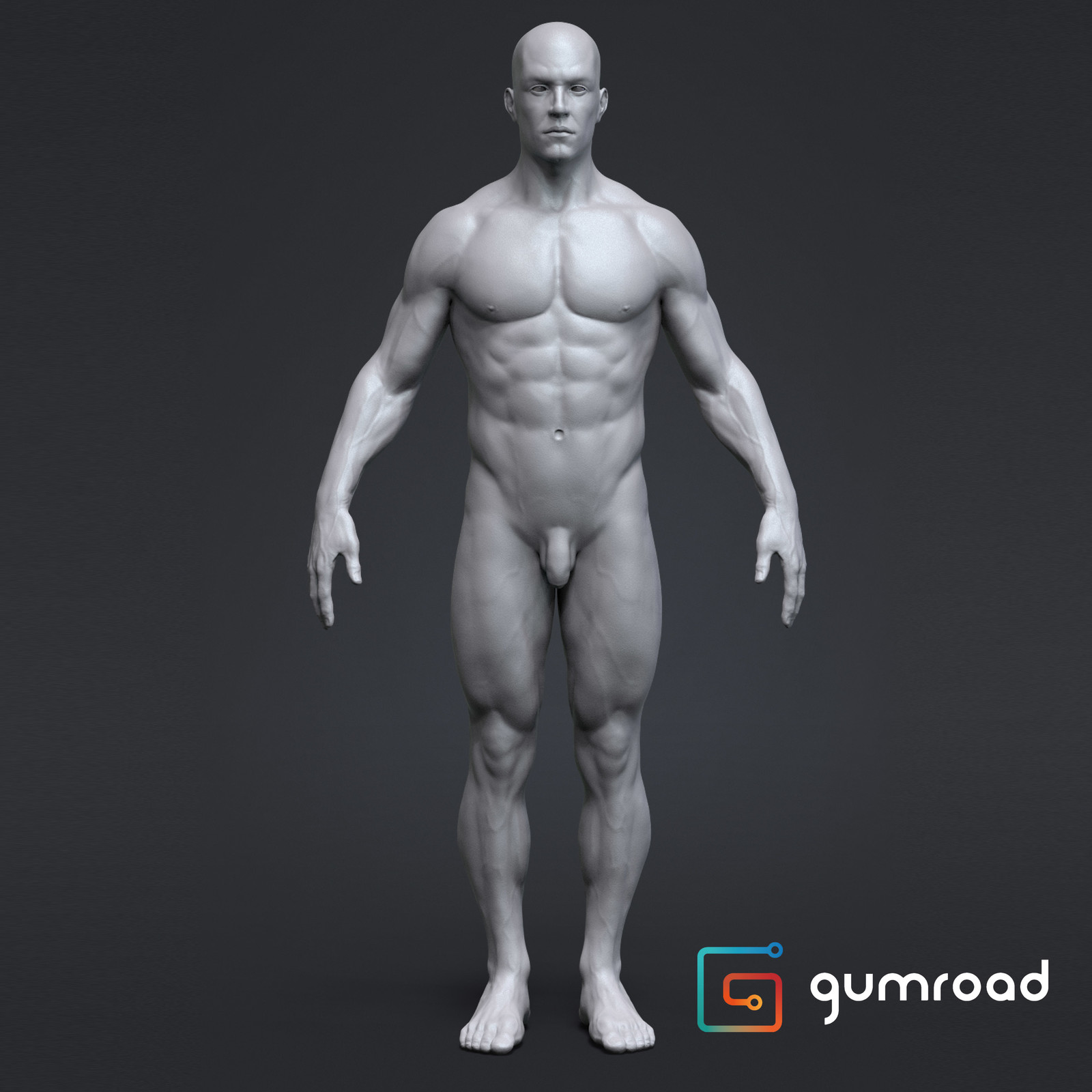 Anatomy Male Tool Reference for Artists !