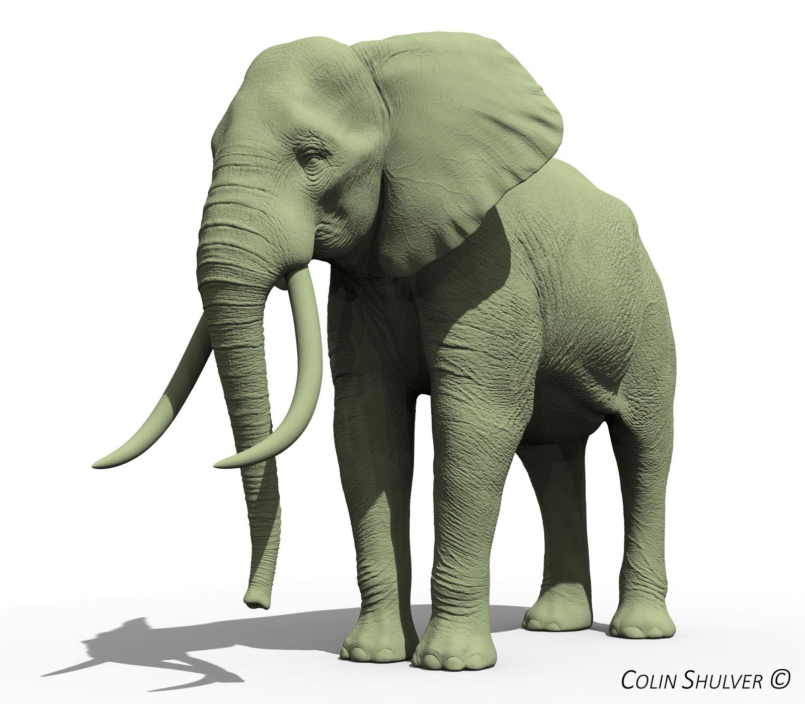 Personal Work - Elephants