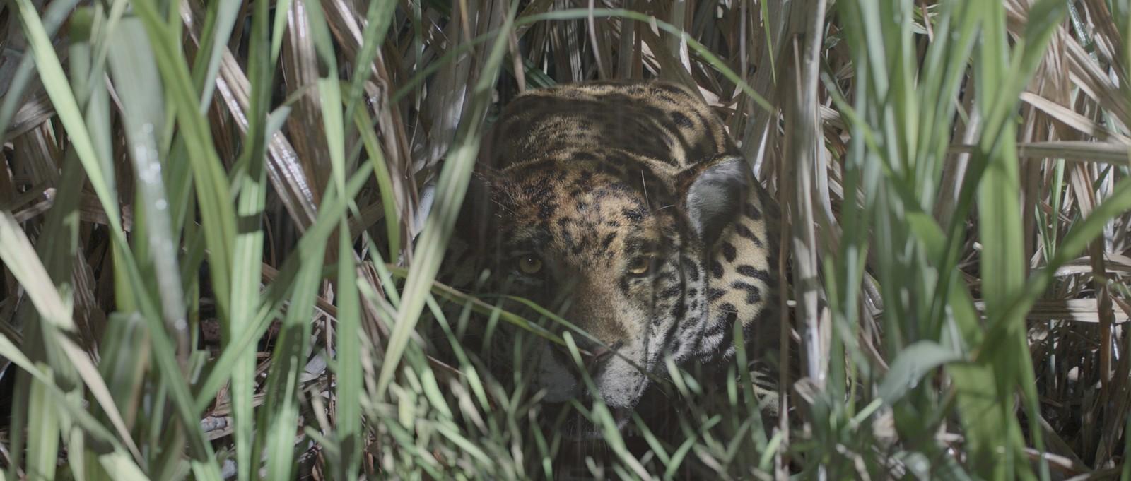 Divórcio - CG Jaguar