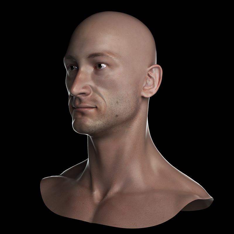 Human bust