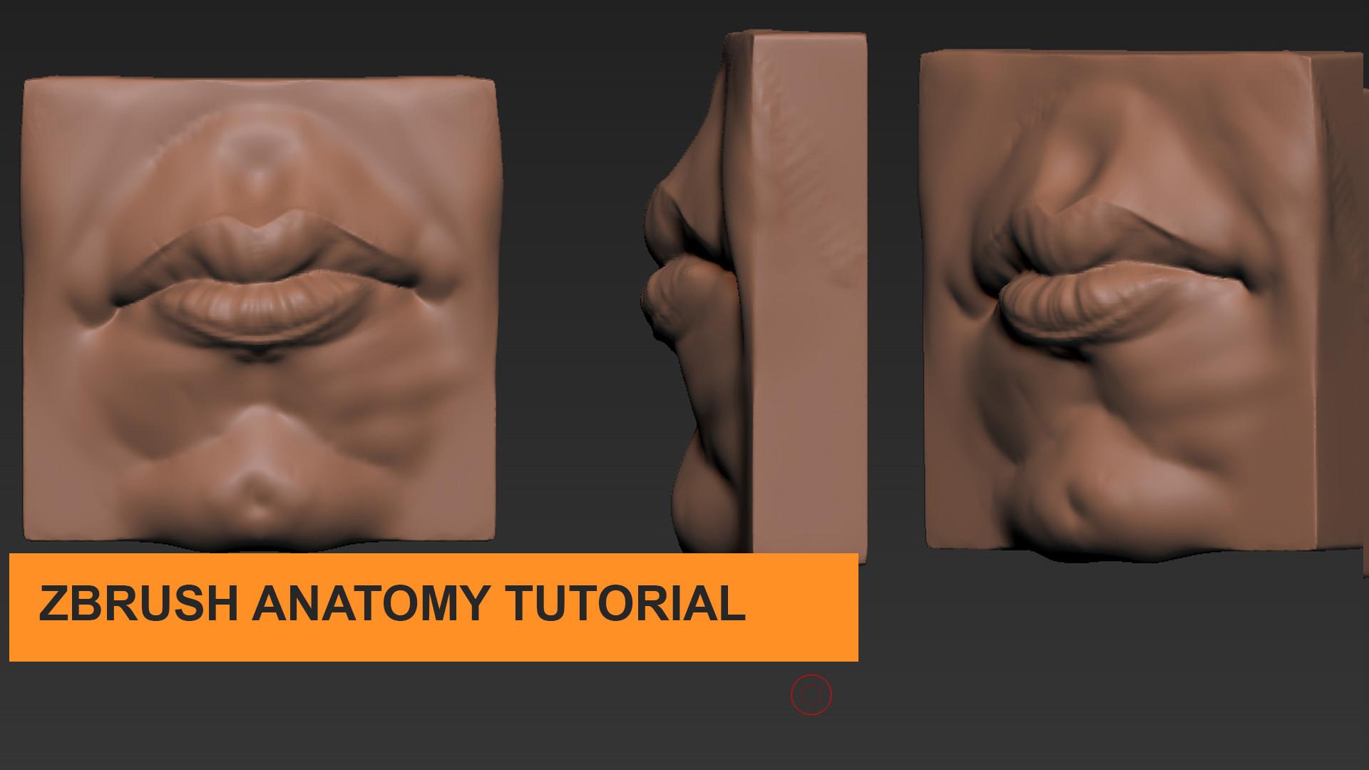 Artstation Zbrush Human Anatomy Mouth Tutorial Parker Davidson