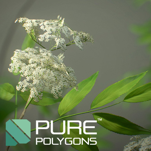 Elderberry Shrubs - Game Assets : PurePolygons