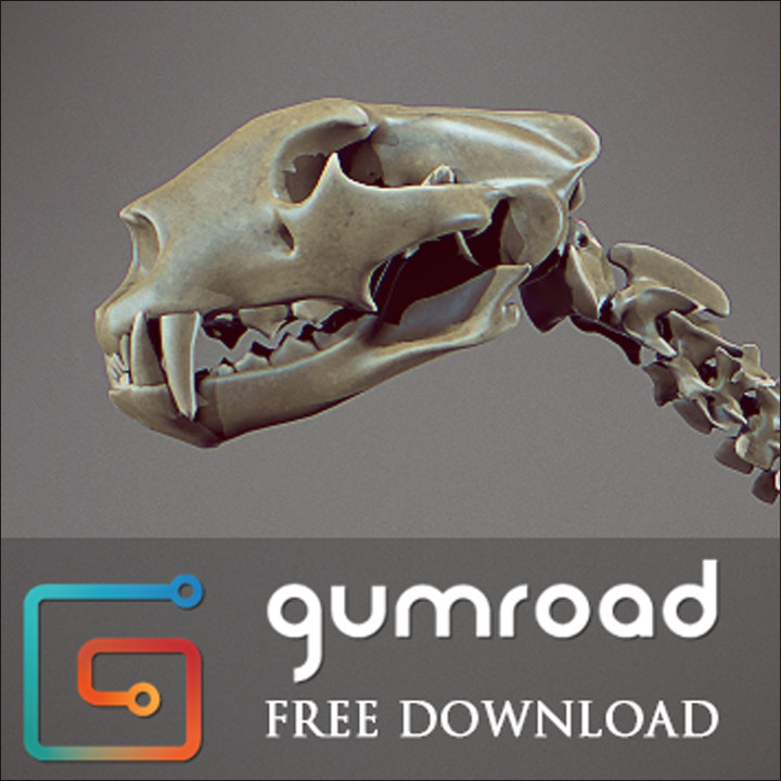 Free Leopard skeleton and references pictures