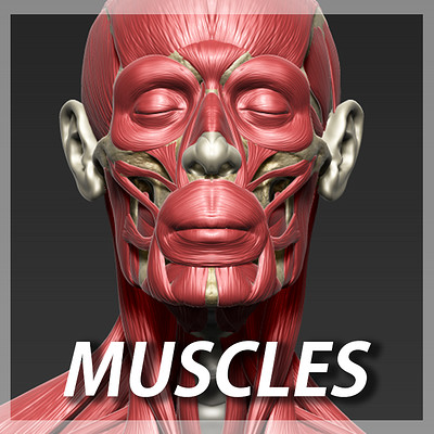 Andrey gritsuk muscle icon 2