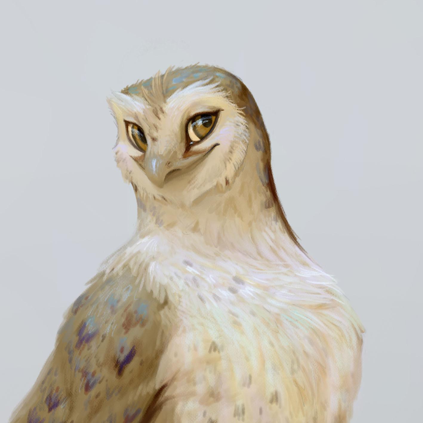 Regulus Project - OWL RACE