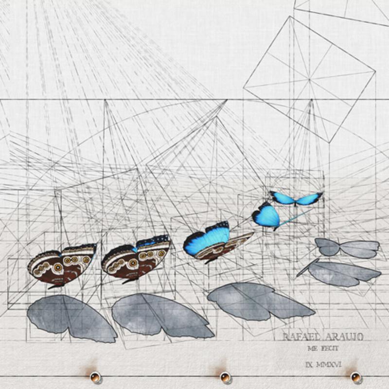 Rafael Araujo - Blue Morpho Animated (2016)