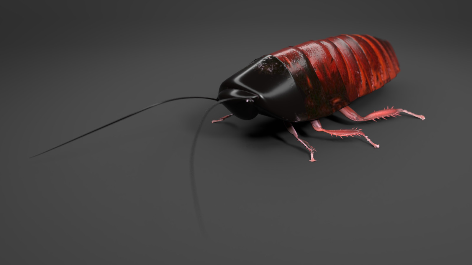Rigged & animated 3D cockroach