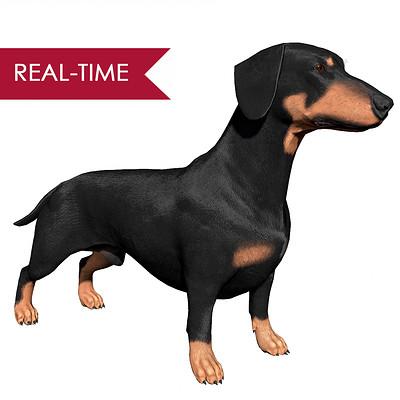 Alex lashko dachshund by alexlashko realtime