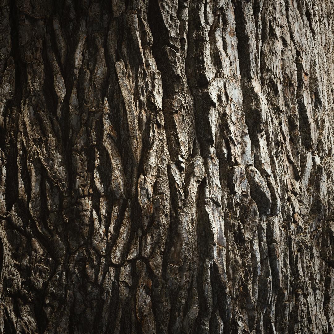 HyperTrees Bark R&D 2