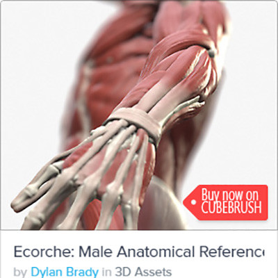 Ecorche: Male Anatomical Reference - http://cbr.sh/kkgpwi