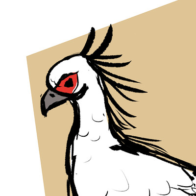Jessi olney secretary bird sketch