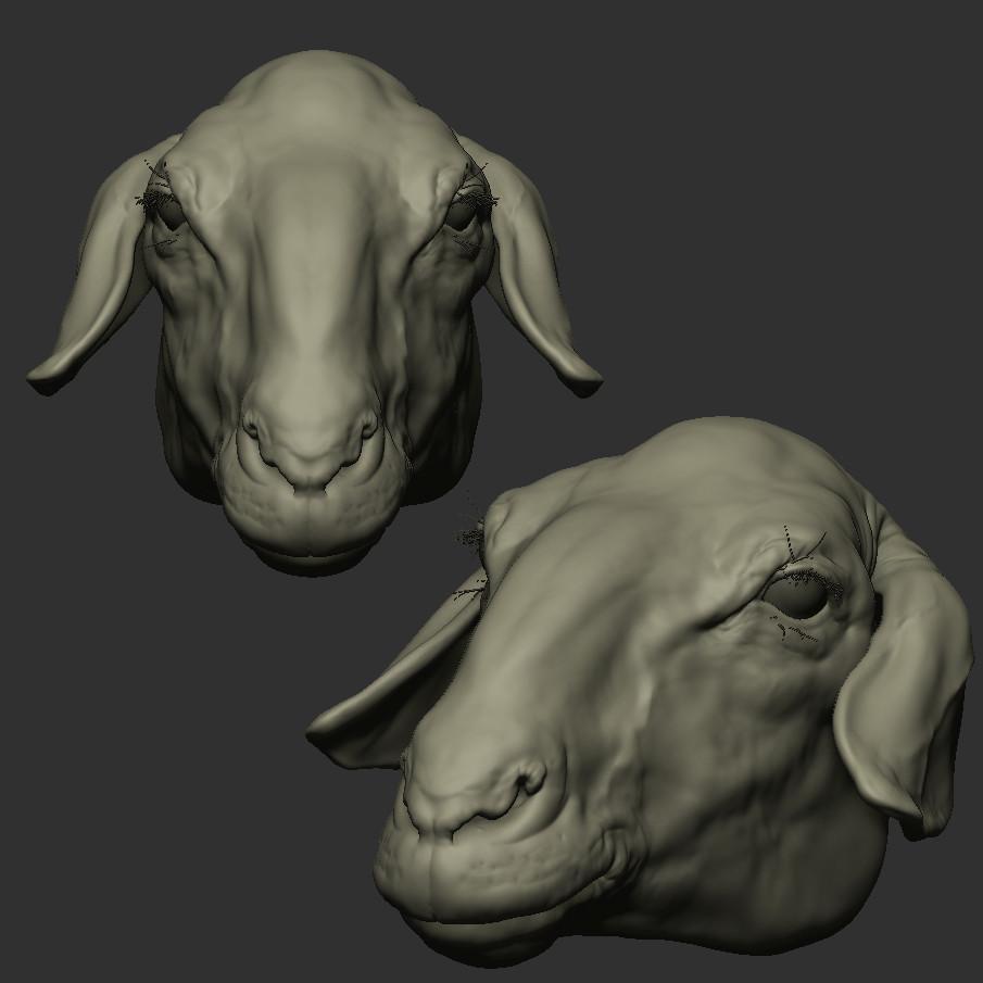 Sheep_Head