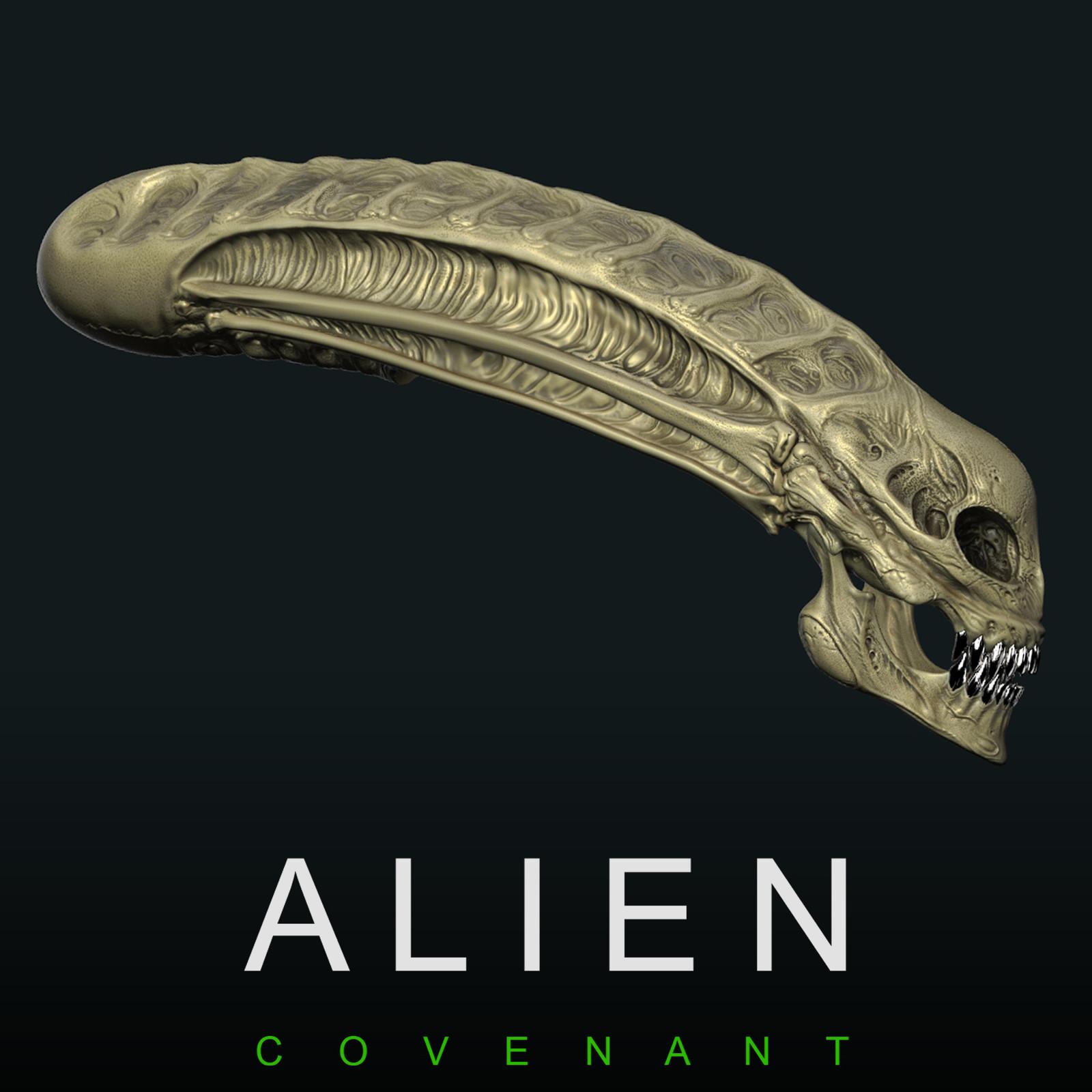 Alien Covenant - Protomorph Skull