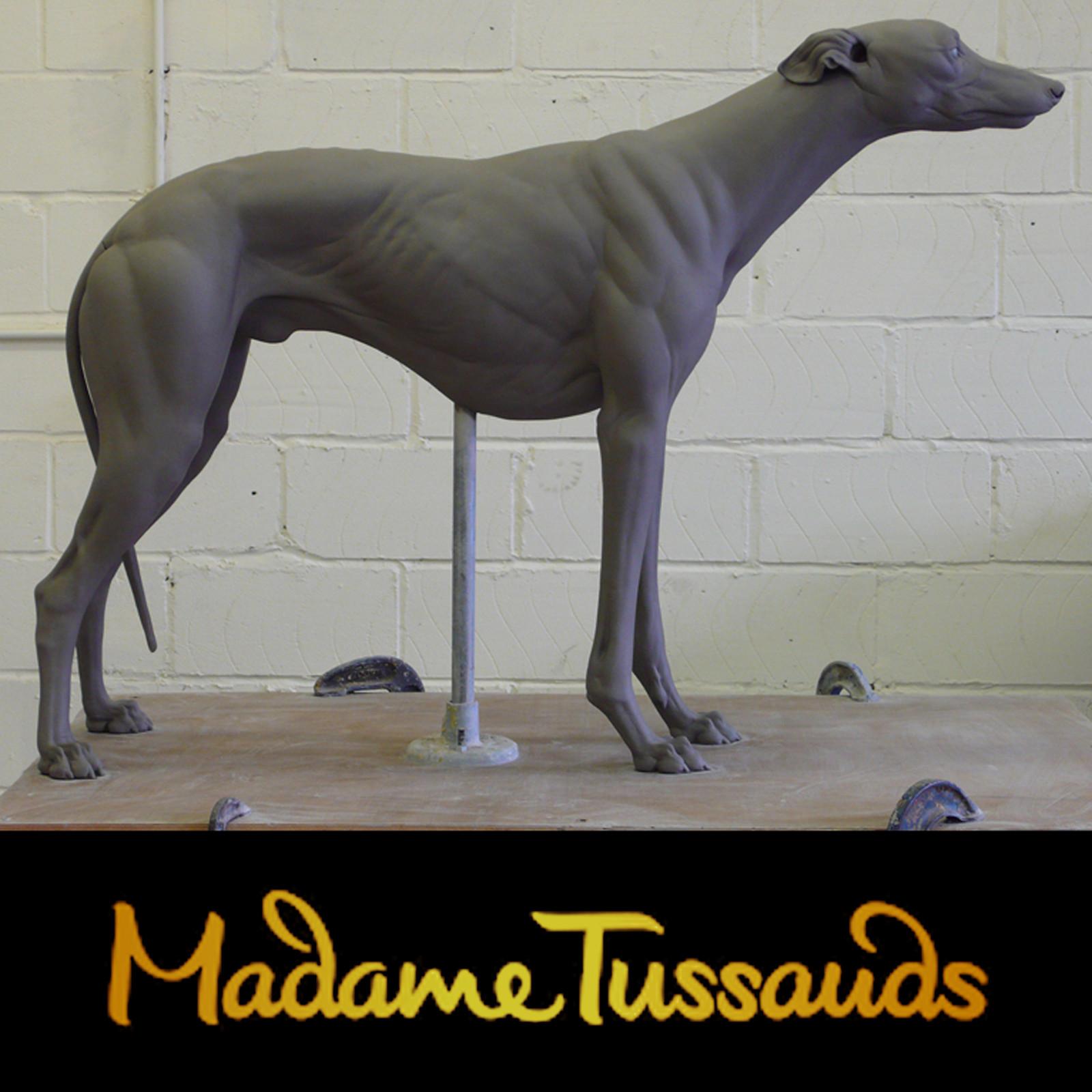 Madame Tussauds - Westmead Hawk