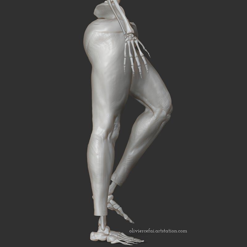 Leg fragment - Anatomy study