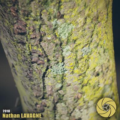 Nathan lavagne thumbnail scanned tree bark
