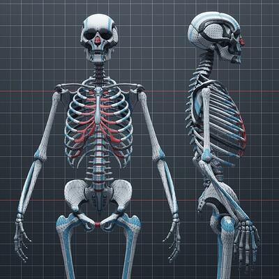 Wanoco 4d anatomy bones 60