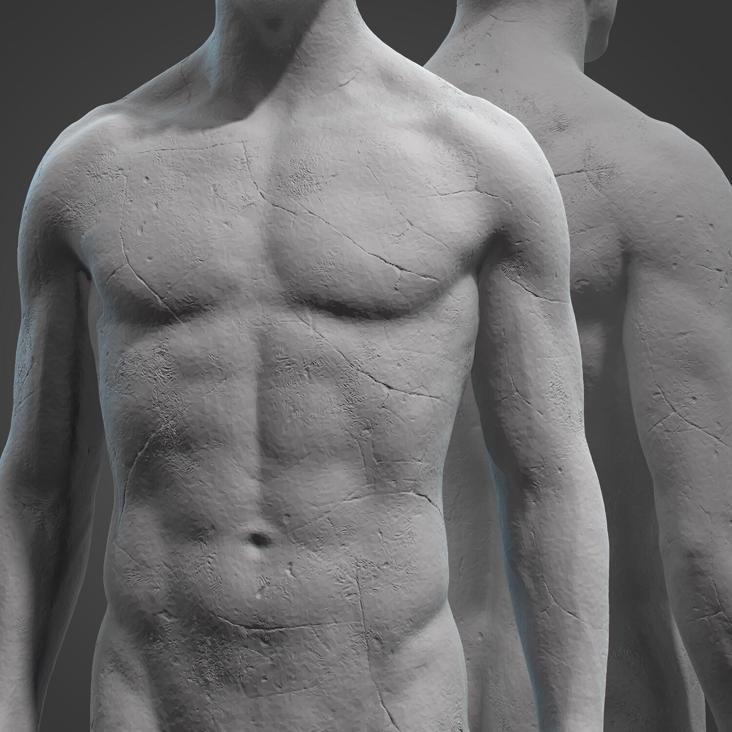 Male Anatomy Statue