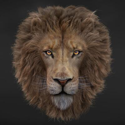 Felipe 3dartist lion