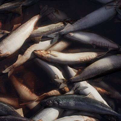 Derk elshof derk elshof fish 02