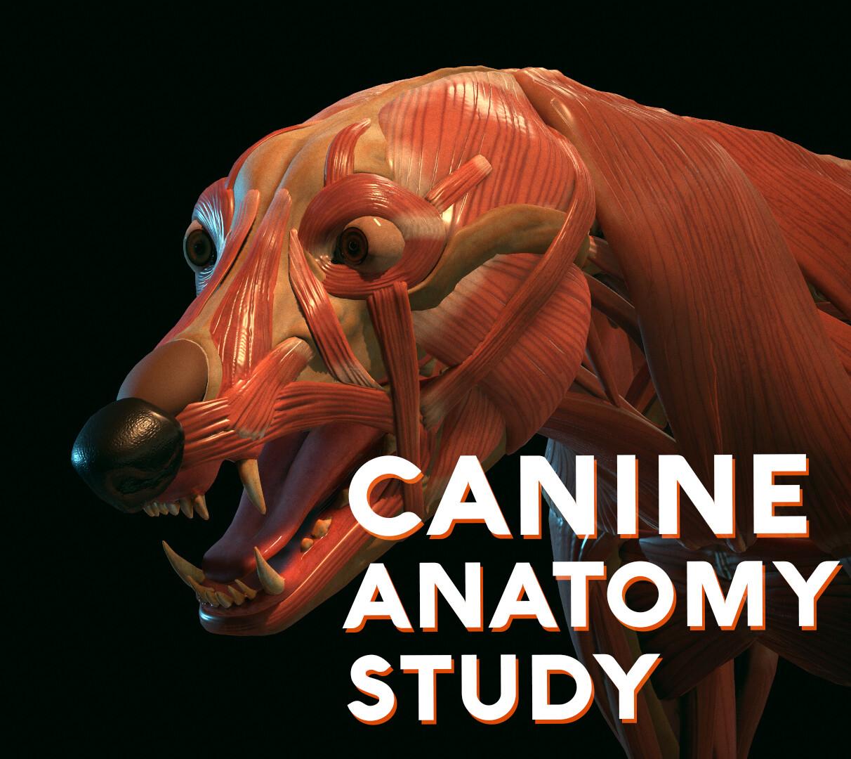 canine anatomy study