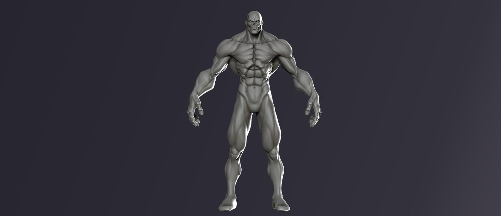 Stylized Anatomy Study
