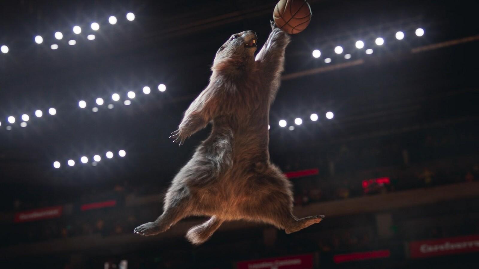 Les marmottes - France 3