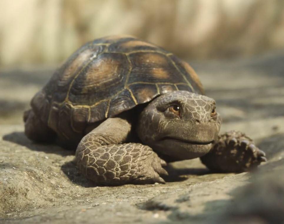 Tortoises - Free Range VFX