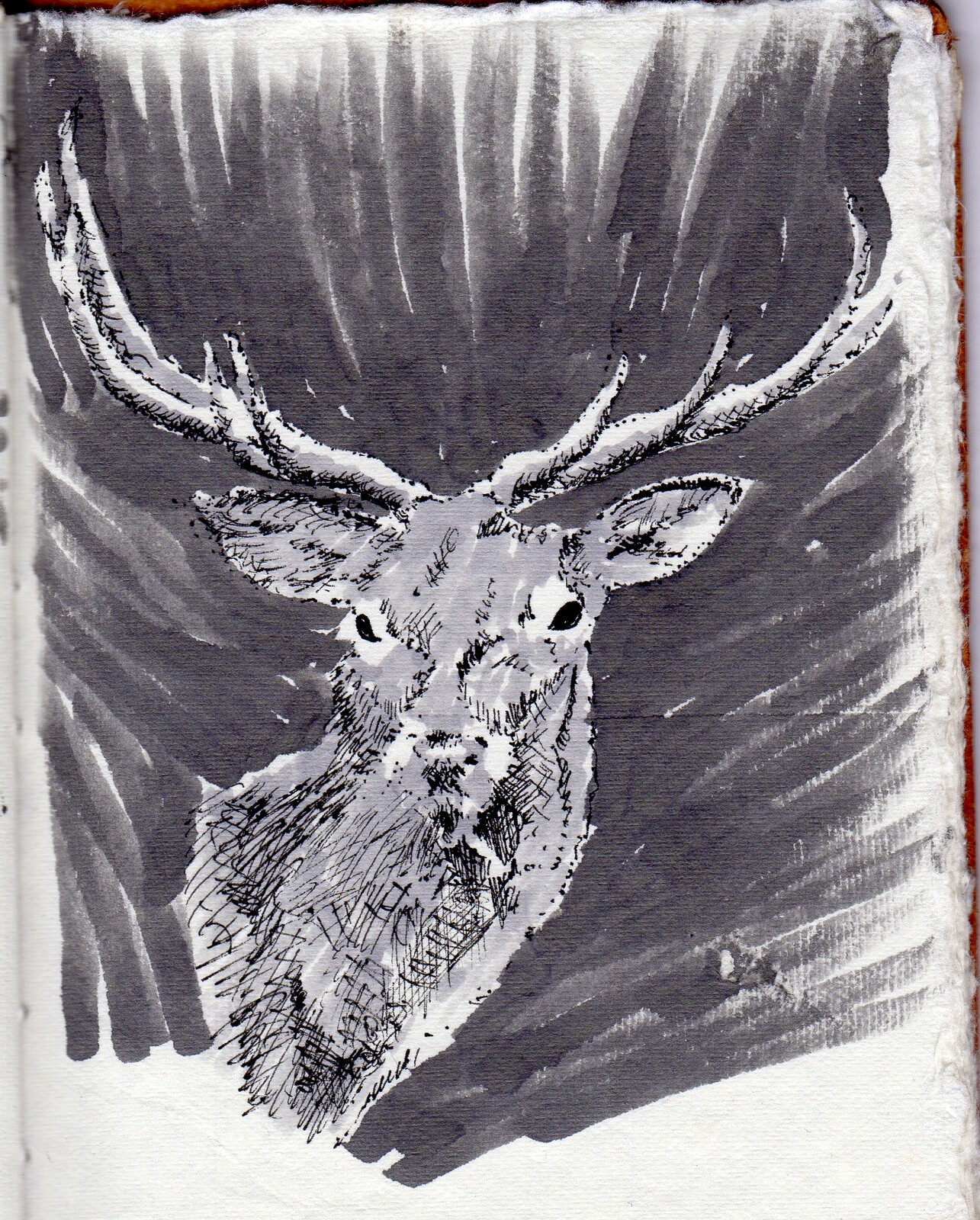 Le cerf de Scourmont