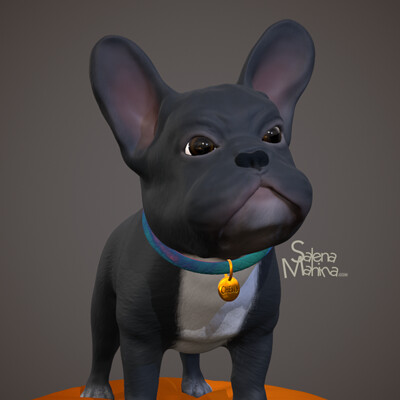 Chewy the Frenchie