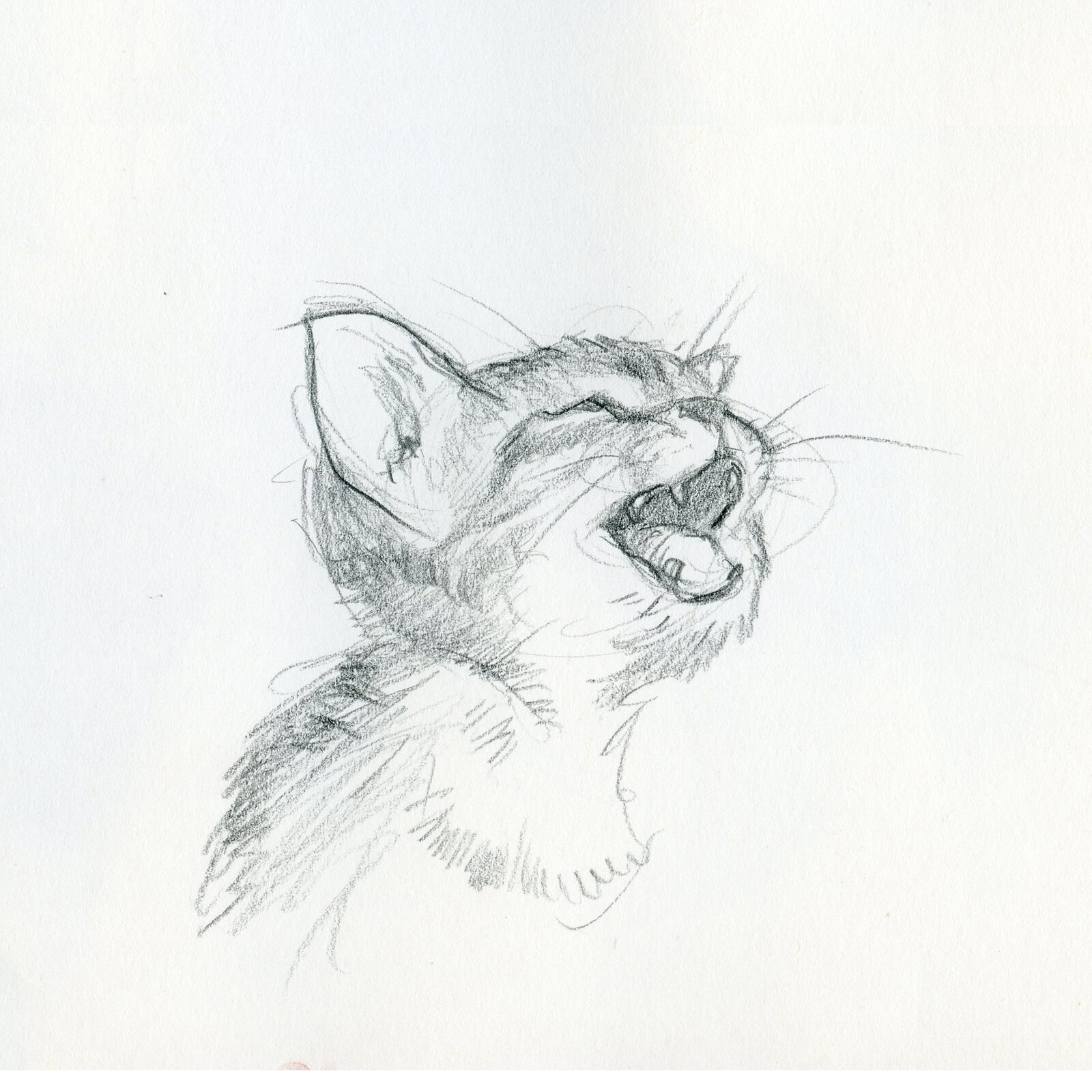Animal Sketches_1