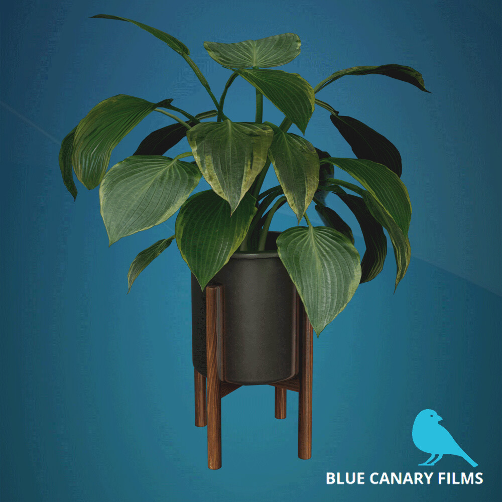 Blue Canary Film - Props