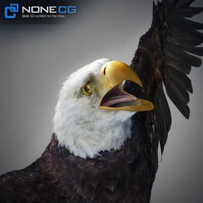 Nonecg 3d nonecg 3d eagle bald 01
