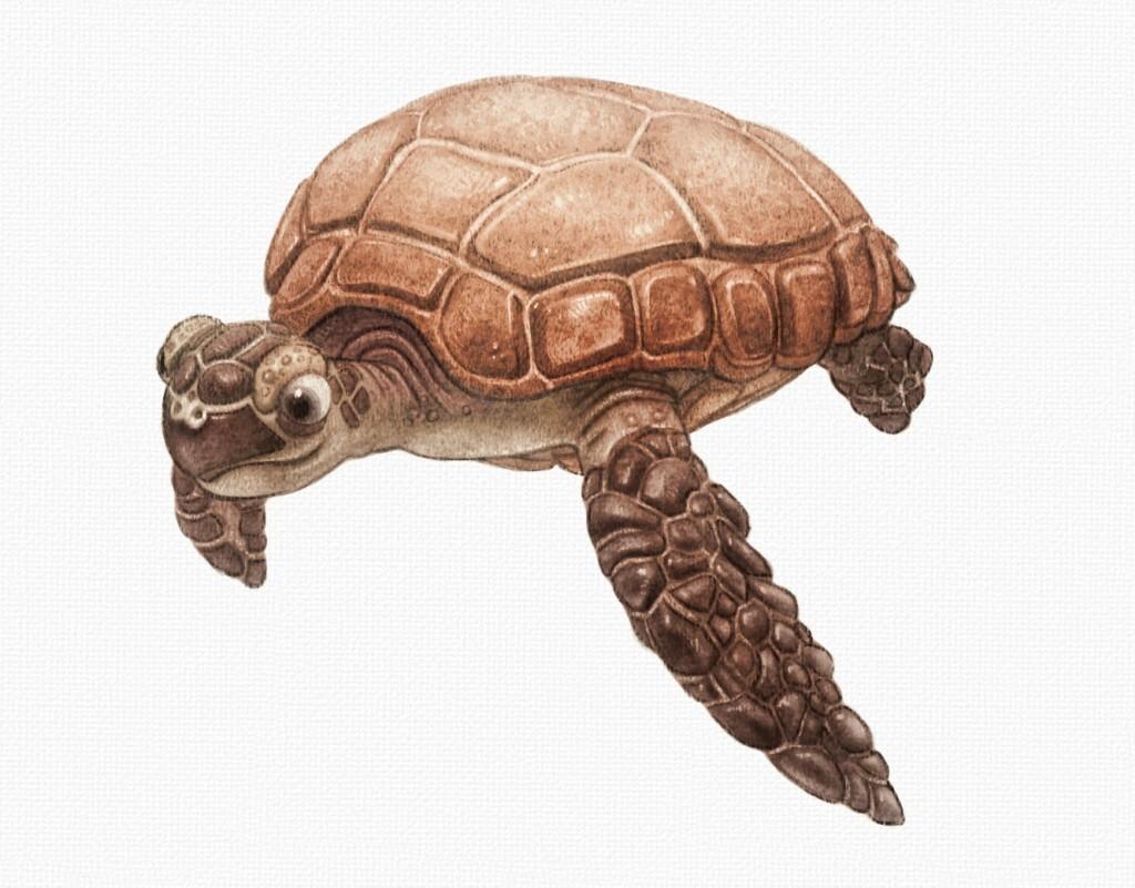 Sea Turtle Digital Pencil Drawings