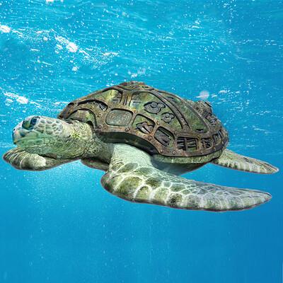 Renan assuncao renan assuncao turtle4