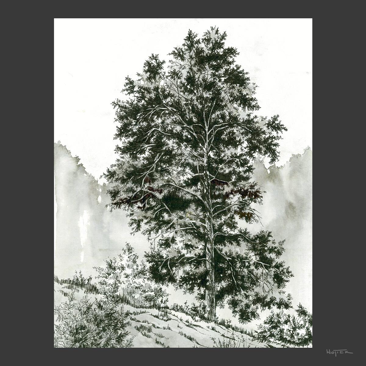 Sketches #02 - Tree Studies
