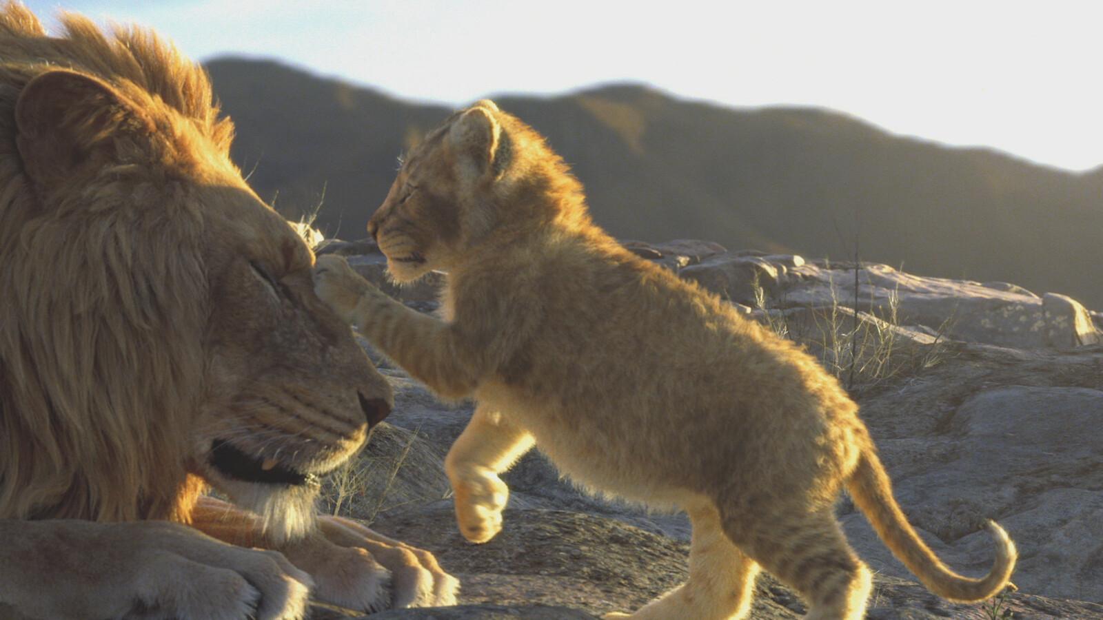 The playful cub