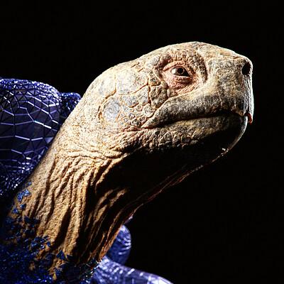 Fabio paiva fabio paiva tortoise as thumbnail