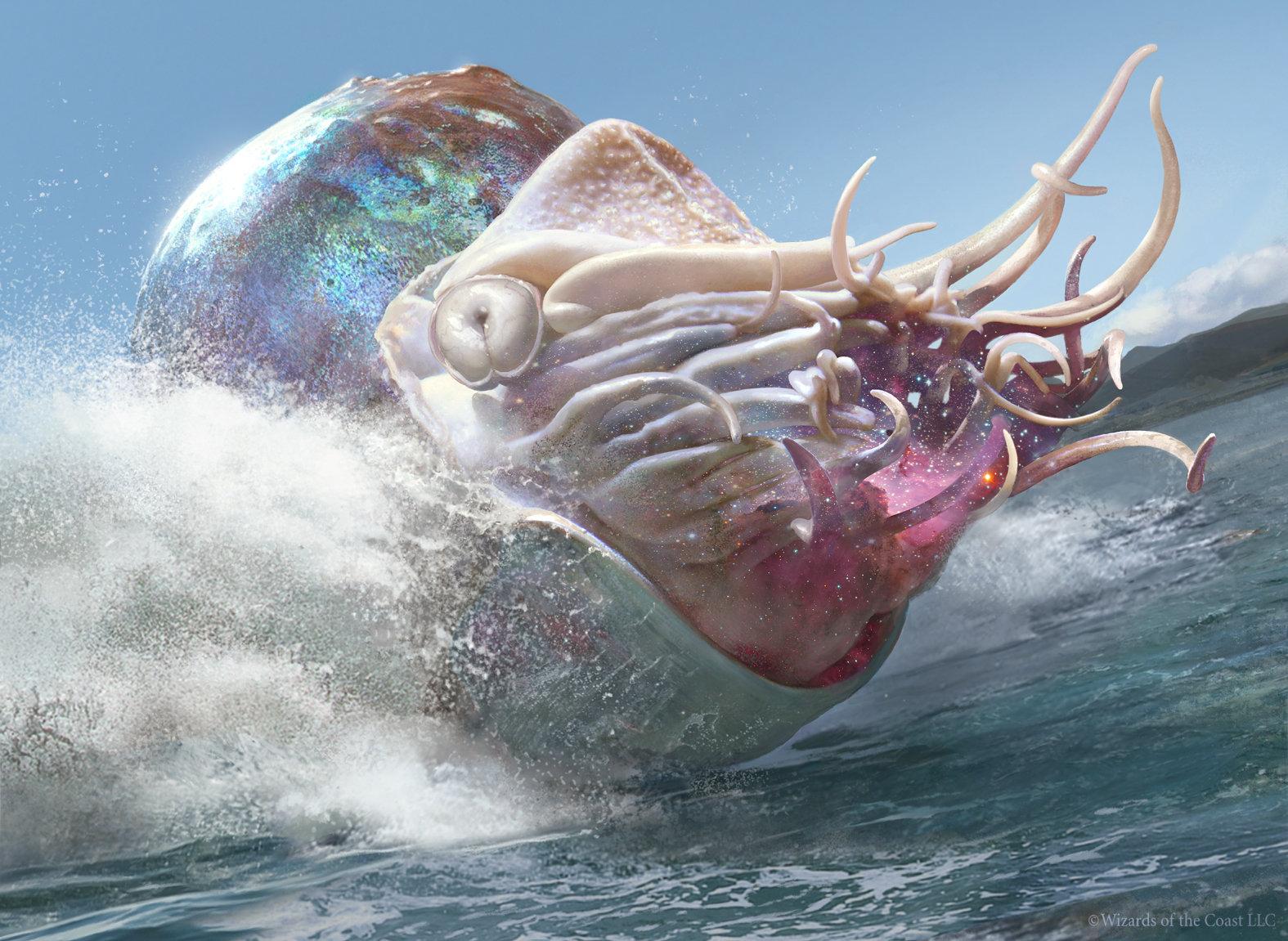 Crystalline nautilus2015