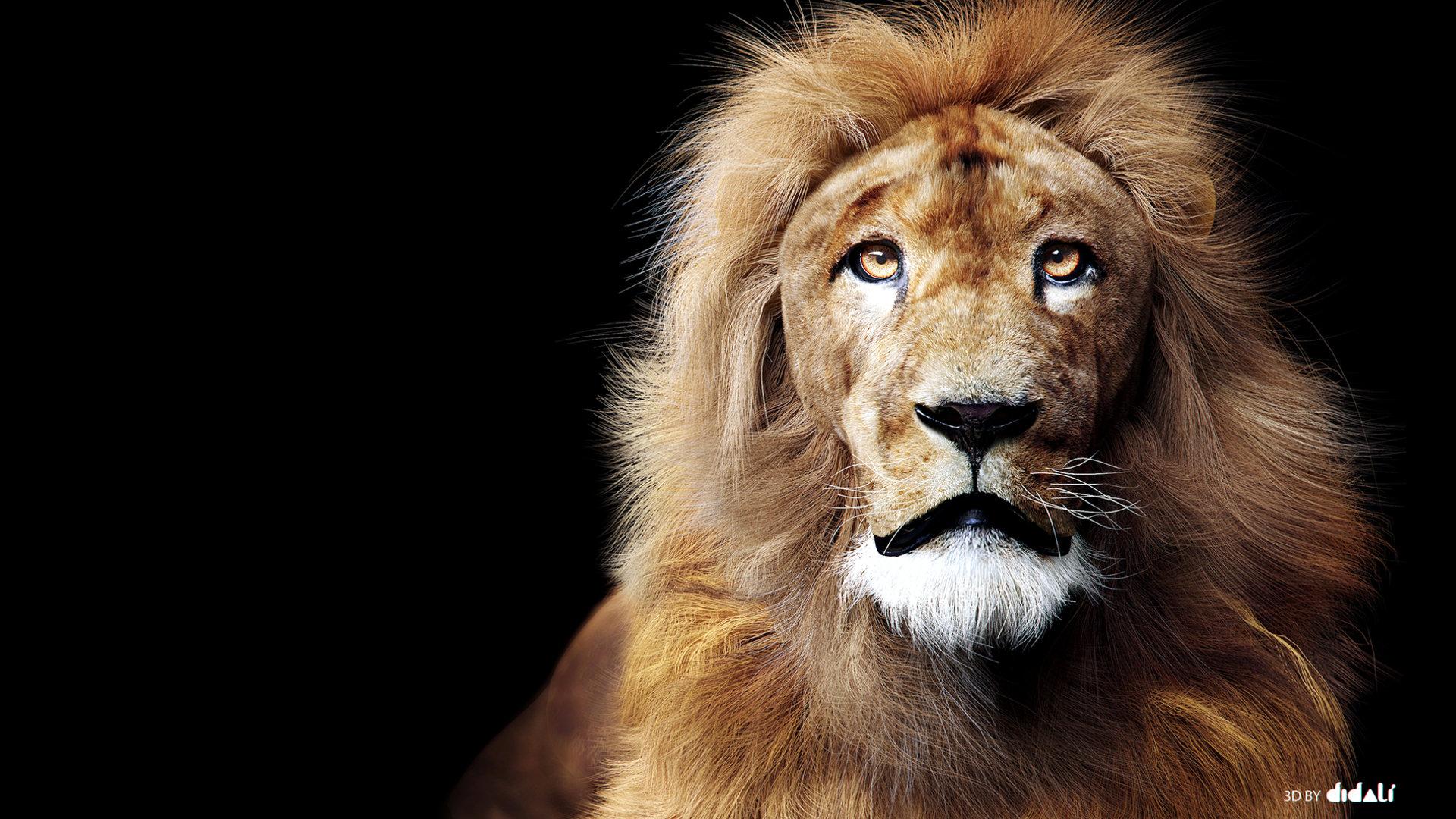 Lion, Guga Baraldi